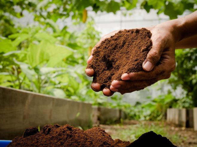 Coffe Compost